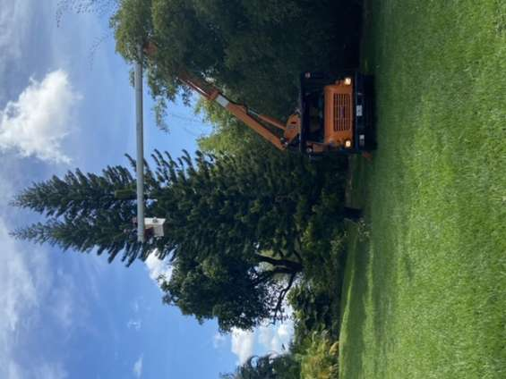 Profesional tree service